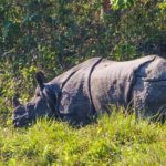 Chitwant Tour